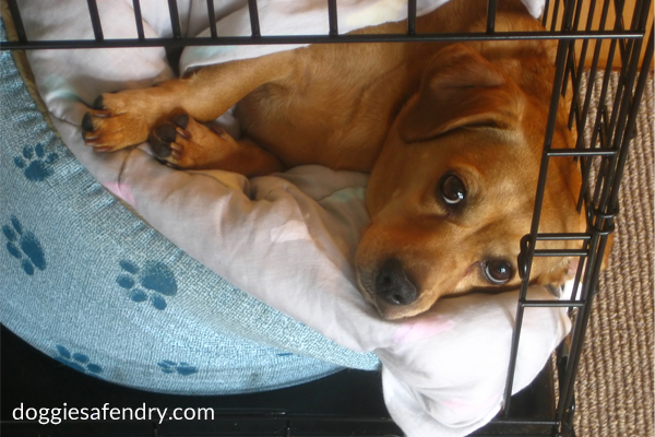 How to Properly Crate Train a Puppy by Doggie Safe n Dry