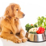 Dog Food Resources