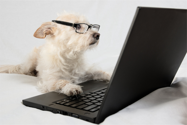 5 Dog Bloggers You're Going to Love by Doggie Safe n Dry