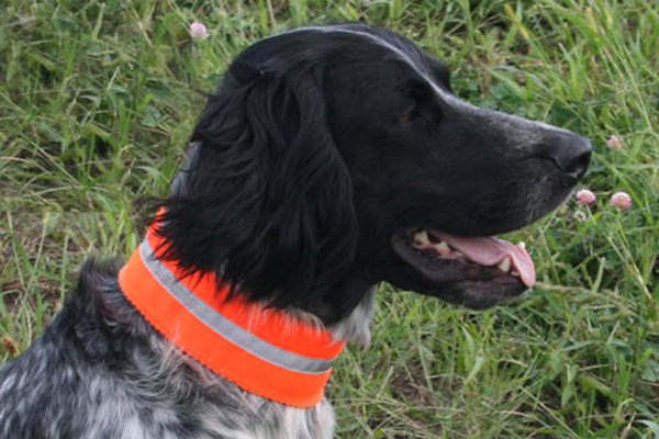 Top 7 Reasons Your Dog Needs a Reflective Collar