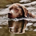 How to Keep your Dog Safe during a Flood