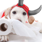 """The Basics of """"Puppy Proofing"""" Your Home"""