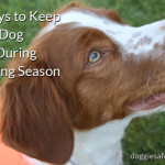 5 Ways to Keep Your Dog Safe During Hunting Season