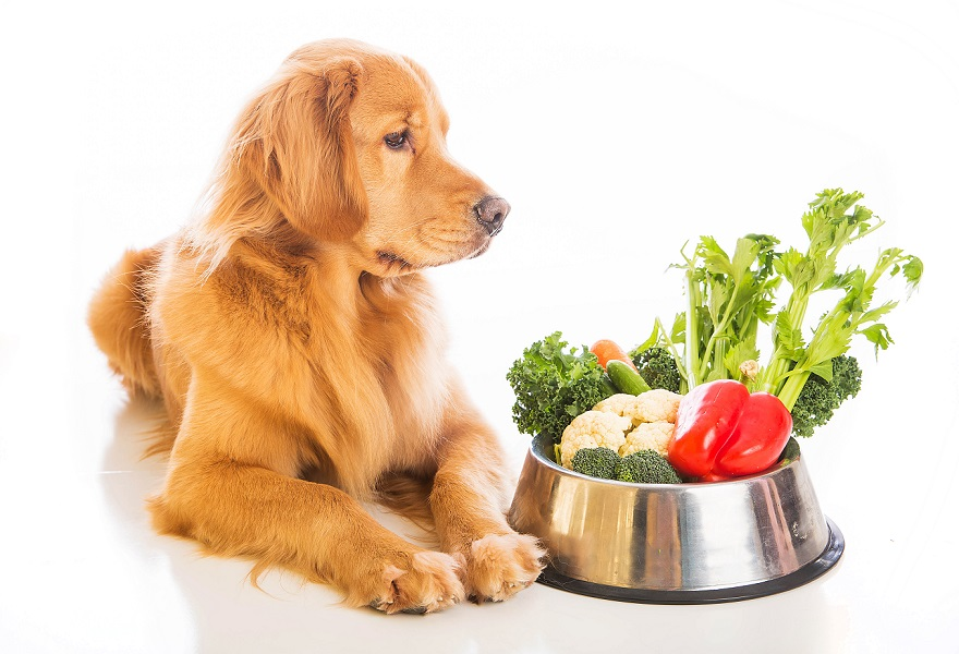 Dog Food Resources by Doggie Safe n Dry