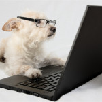 5 Dog Bloggers You're Going to Love